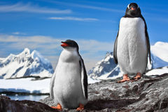 Stillstehen mit zwei Pinguinen Lizenzfreies Stockfoto