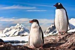 Stillstehen mit zwei Pinguinen Stockfotos