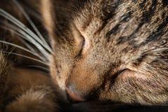 Stillstehende Katze Lizenzfreie Stockbilder
