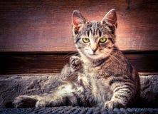 Stillstehende Katze Stockfoto