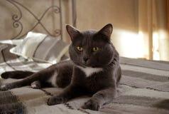 Stillstehende Katze Stockbild