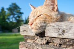 Stillstehende Katze Lizenzfreies Stockbild