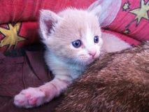Stillstehende kleine schöne Katze Stockfoto