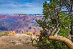 Stillstehender Baum Stockfotografie