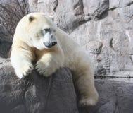 Stillstehender Eisbär Stockbild