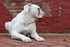 Stillstehender Hund Stockfoto