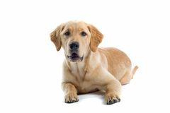 Stillstehender Hund Stockfotografie
