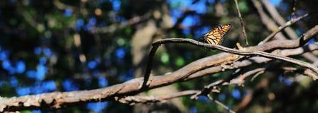 Stillstehender Monarch Lizenzfreies Stockfoto