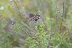 Stillstehender Schmetterling lizenzfreie stockfotos