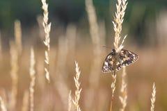 Stillstehender Schwarzweiss-Schmetterling auf einem Blatt lizenzfreies stockbild