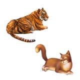 Stillstehender Tiger, junges rotbraunes Katzenlegen Stockbild