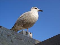 Stillstehender Vogel Stockbild