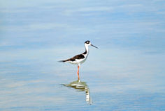 Stilt royalty free stock photo