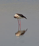 Stilt clean oneself Royalty Free Stock Photography