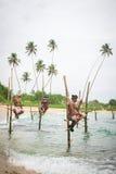 Stilt fishermen in Koggala, Sri Lanka royalty free stock image