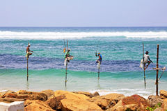The Stilt Fishermen of Sri Lanka. Stilt fishing is a method of fishing unique to the island country of Sri Lanka, located off the coast of India in the Indian royalty free stock photo