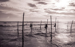 Stilt fishermen in Sri Lanka Royalty Free Stock Image