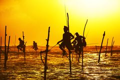 Stilt fishing stock image
