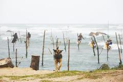 Stilt fishing Stock Photography