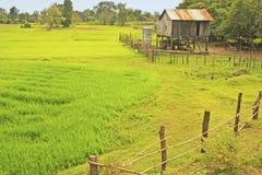 Stilt house near rice field, Cambodia Royalty Free Stock Images