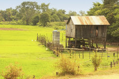 Stilt house near rice field, Cambodia Stock Photo