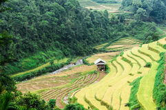 Stilt House On The Rice Terraces Filed Royalty Free Stock Image