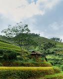Stilt house with the rice fields Stock Image