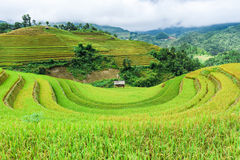 Stilt house on the rice terraced field with the sky and clouds royalty free stock image