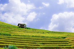Stilt house on top of hill with the rice fields Stock Photos