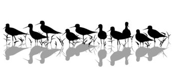 Stilt waders in marsh silhouette stock photography