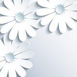 Stilvolle graue Tapete mit Kamille des Weiß 3d lizenzfreie abbildung