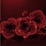 Stilvolle rote Rose. Stockbild