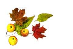 Stilvolle Zusammensetzung des bunten Gemüses, der Früchte, des Herbstlaubs und der Beeren Draufsicht über weißen Hintergrund lizenzfreie stockfotos