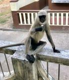 Stilvoller Affe Stockbild