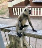 Stilvoller Affe Stockbilder