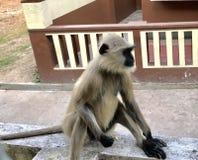 Stilvoller Affe Lizenzfreies Stockfoto