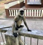 Stilvoller Affe Lizenzfreie Stockbilder