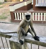 Stilvoller Affe Stockfoto