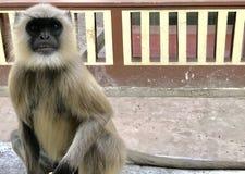 Stilvoller Affe Lizenzfreies Stockbild
