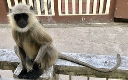 Stilvoller Affe Stockfotografie
