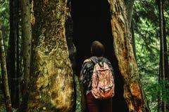 Stilvoller Frauenhippie-Reisender, der erstaunlichen Baum mit Loch betrachtet Lizenzfreies Stockbild