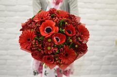 Stilvoller roter Blumenstrauß in den Händen am Mädchen stockbild
