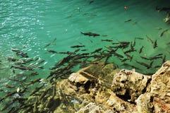 Stim av fisken Fotografering för Bildbyråer