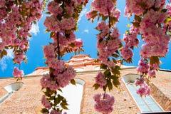 Stimmung des Frühlinges Stockfoto