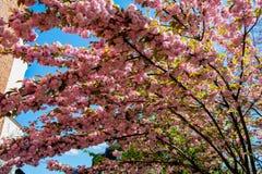 Stimmung des Frühlinges Stockfotografie