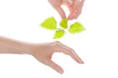 Stinging nettle arthritis medicine. Female hand holding stinging nettle and touching her hand. Natural arthritis medicine royalty free stock photos