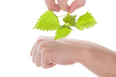 Stinging nettle arthritis medicine. Stock Photography
