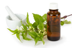 Stinging nettle medicine Royalty Free Stock Photos