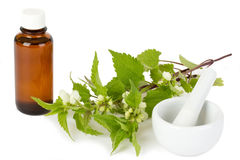 Stinging nettle with medicine bottle and mortar royalty free stock image