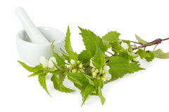 Stinging nettle with mortar royalty free stock images